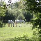 Espace naturel sensible - La prairie Malécot