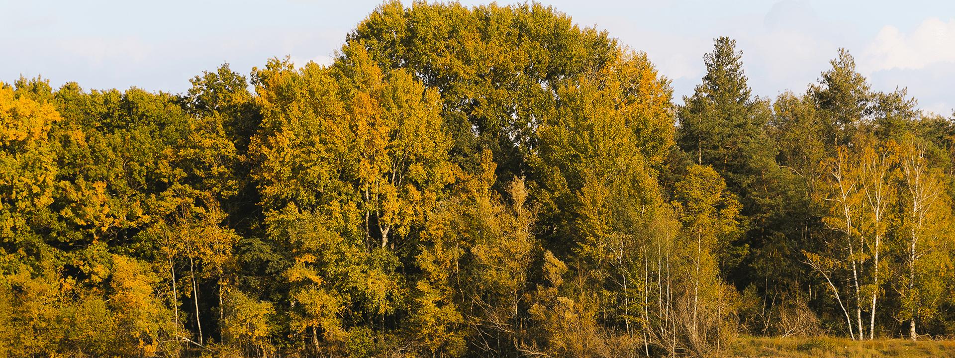 Arbres au bord d'un étang dans la plaine de Sorque