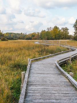 chemin de promenade à l'ENS le marais d'Episy