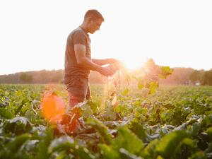 producteur de betteraves dans un champ