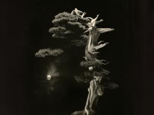 Une oeuvre photographique de Masao Yamamoto