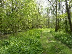 Espace naturel sensible - Les îles de l'Orvanne