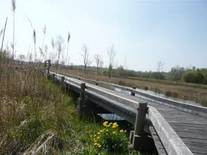 Espace naturel sensible - Le marais d'Épisy