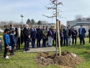 Un arbre planté au collège André Malraux de Montereau