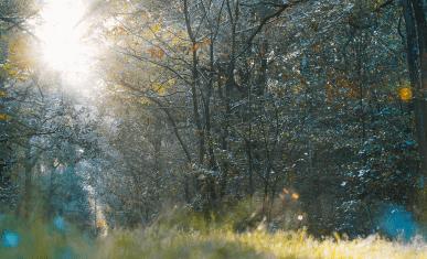 ENS Bois de la Rochette