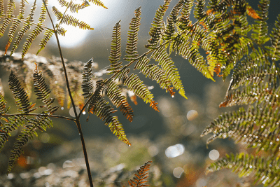 feuillage au bois de la Rochette