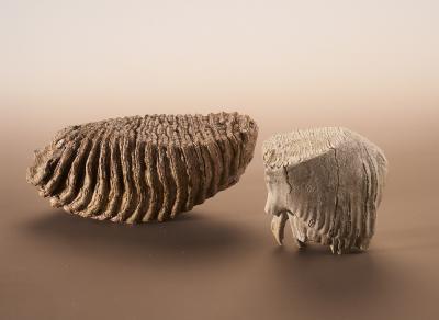 Molaires de mammouth