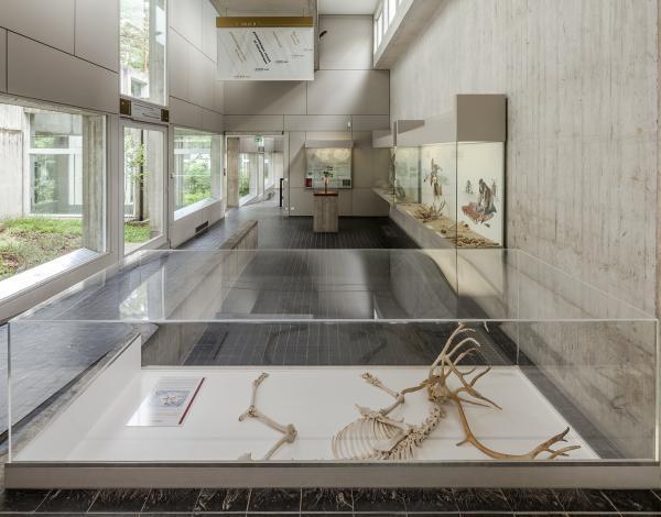 Musée préhistoire