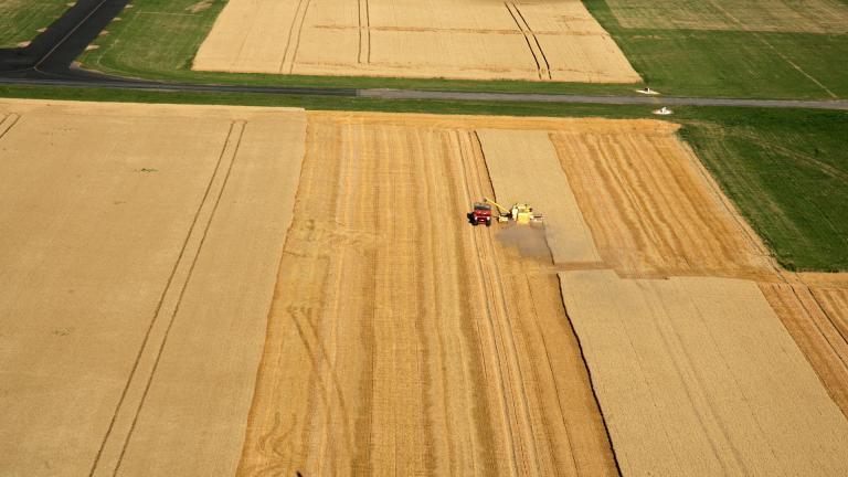 Un champ de céréales en plongé