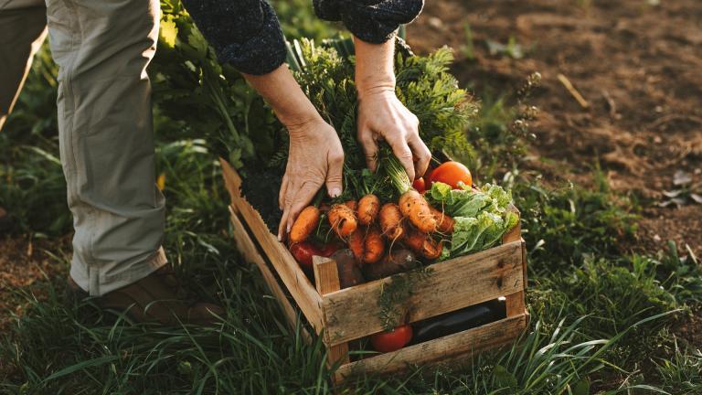 Un panier de légumes